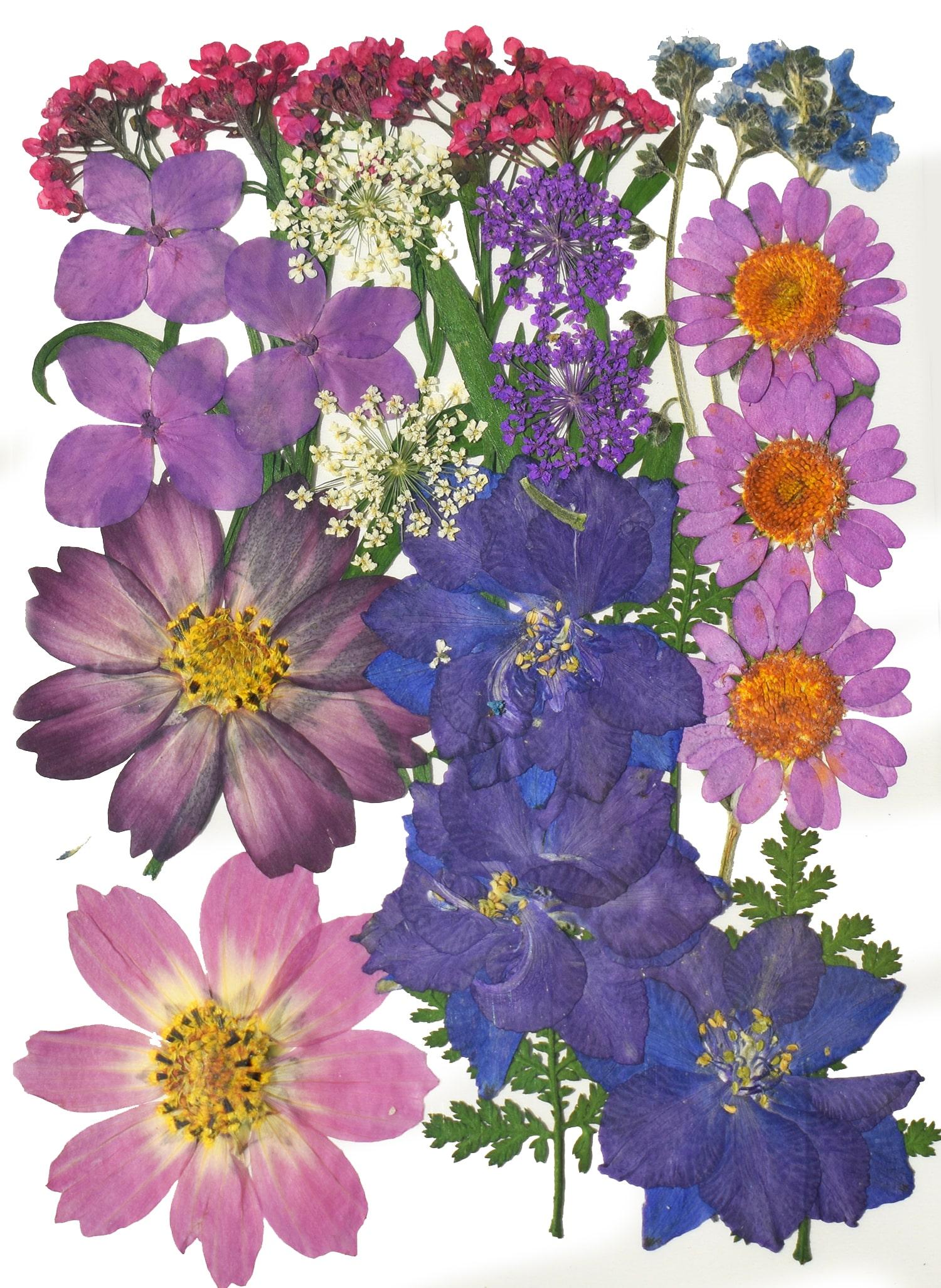 I Tipi Di Fiori.Bouquet Viola 9 Tipi Di Fiori Pressati Resine Epossidiche