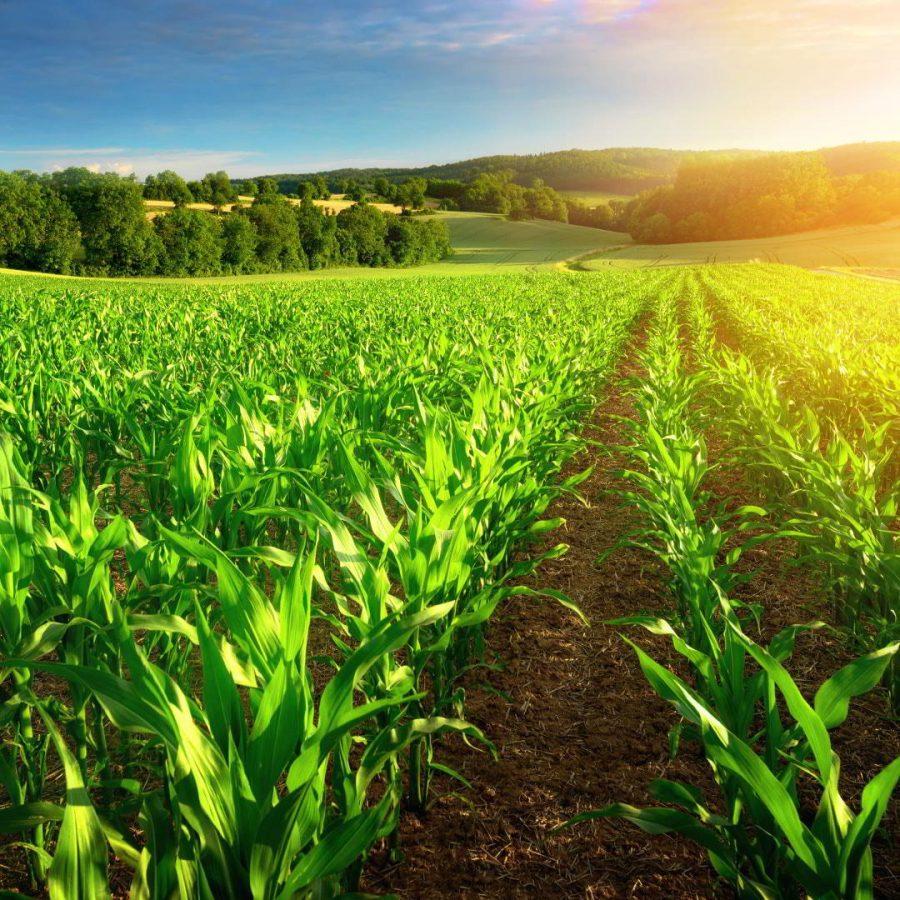 Bio Resina: la Resina Epossidica Ecologica è Una scelta green e rinnovabile!